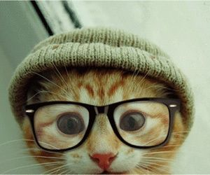 Animals Wearing Glasses | Paw-Some: 25 Pics of Animals Wearing Glasses glasses-main – gURL.com ...