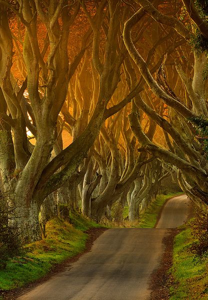 The Dark Hedges II. Co Antrim, N. Ireland. An interesting attraction is the Dark Hedges, an avenue of beech trees south of Ballycastle near Armoy. Ballypatrick Forest lies on the Ballycastle to Cushendall road and has a number of view points, walks, a scenic drive, and picnic areas.