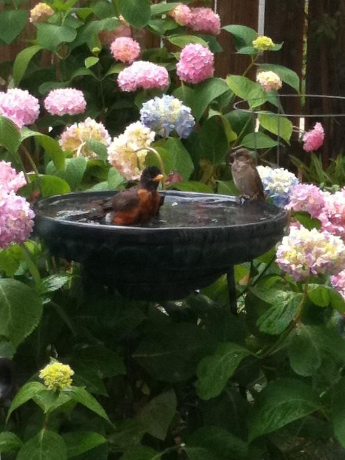 1000 ideas about bird bath garden on pinterest concrete. Black Bedroom Furniture Sets. Home Design Ideas