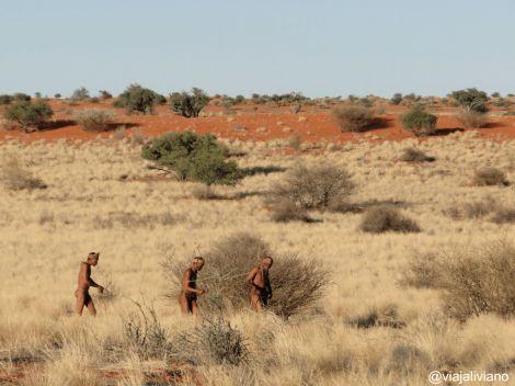 Bosquimanos Namibia