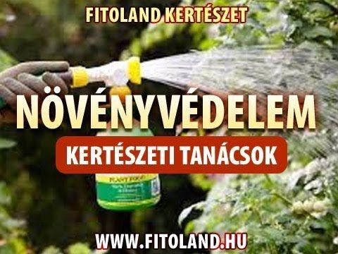 Dísznövények védelme, növénybetegségek - kertészeti tanácsok