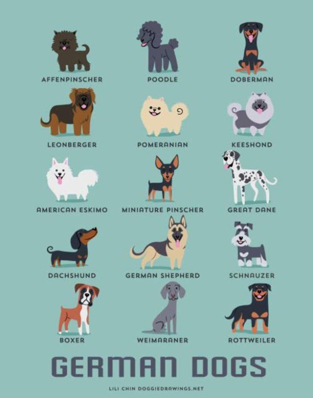 Dibujos adorables de razas de perros, agrupados por su lugar de origen