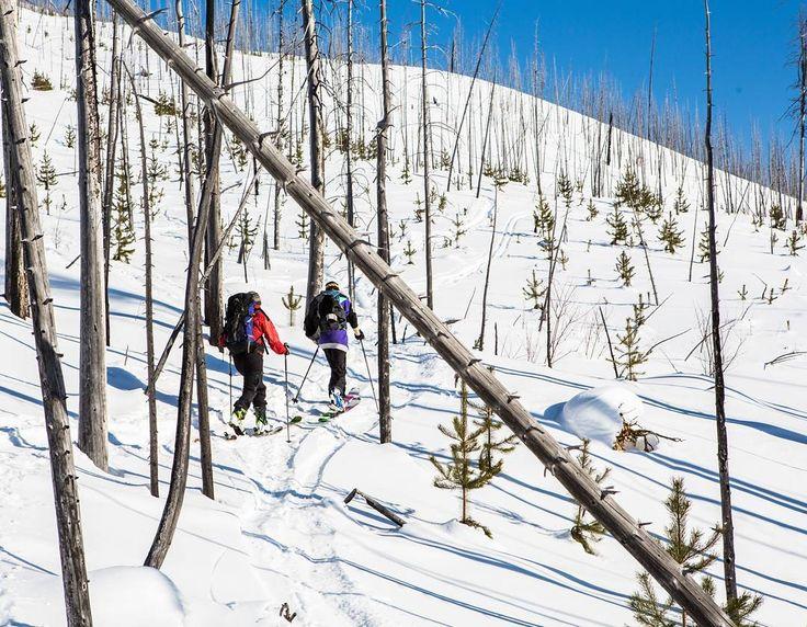 Skin tracks are the only kind of morning commute I need! #skitouring #earnyourturns #backcountryskiing #backcountry #untrackedexperience #MountainCultureElevated #ExploreBC #myBCbackcountry