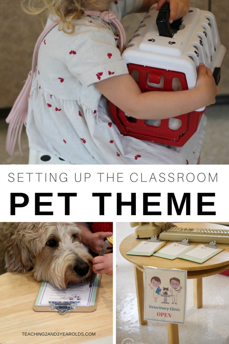 Setting Up The Pet Theme Classroom Pets Pets Preschool Pets Preschool Theme