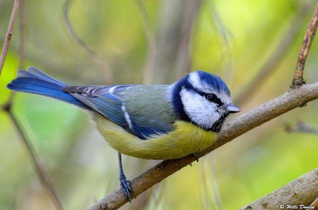 Les oiseaux et autres animaux de nos jardins et forets for Oiseaux de nos jardins