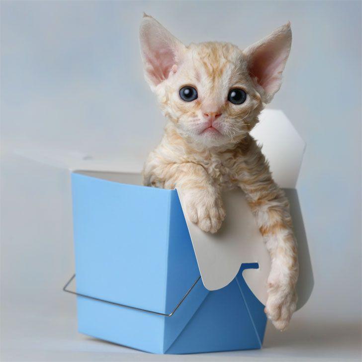 sssooo getting one of these kitties.