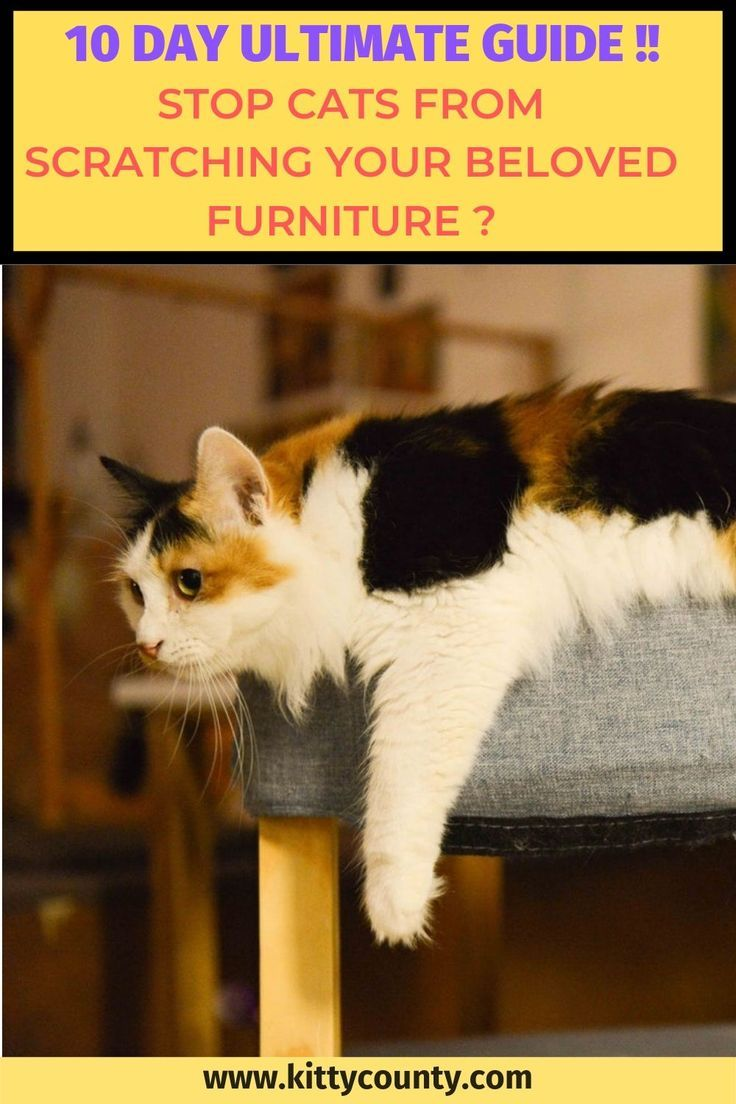 10 Day Step By Step Guide To Stop Your Cats Scratching Your Furniture Cat Training Cat Scratching Furniture Cats