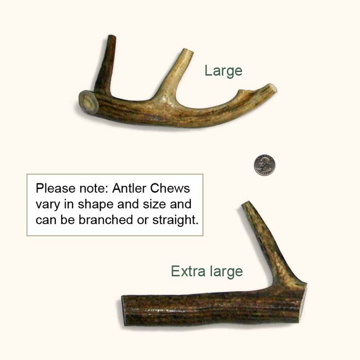 Weird, but supposedly awesome for your dog! Antler Dog Chews