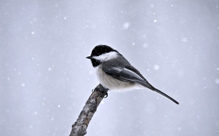 bird picture desktop, 1920x1200 (248 kB)