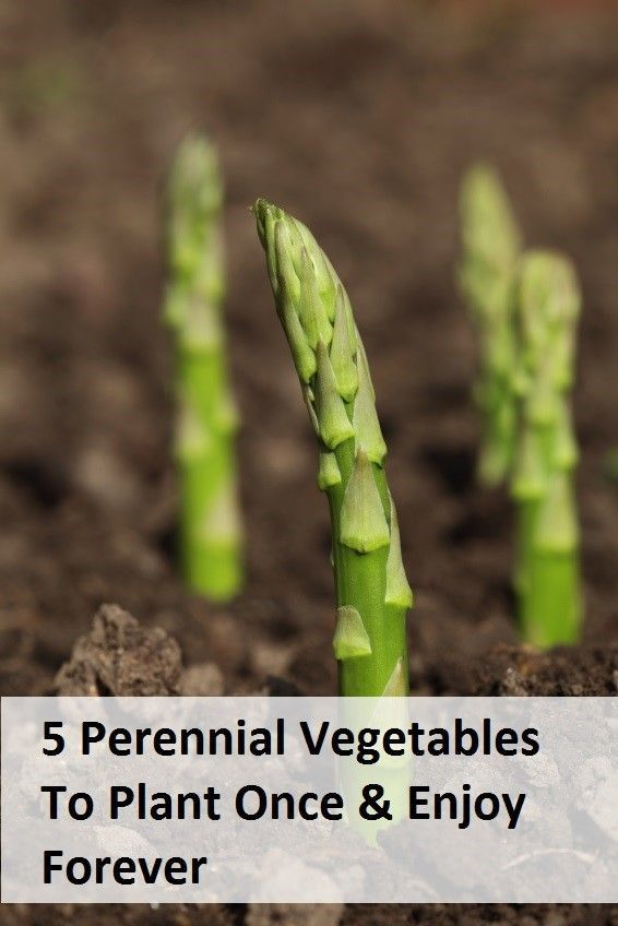 http://www.diyhomeworld.com/5-perennial-veggies-to-plant-once-and-enjoy-forever/ Perennials are plants which grow back year after year without having to be replanted each spring.