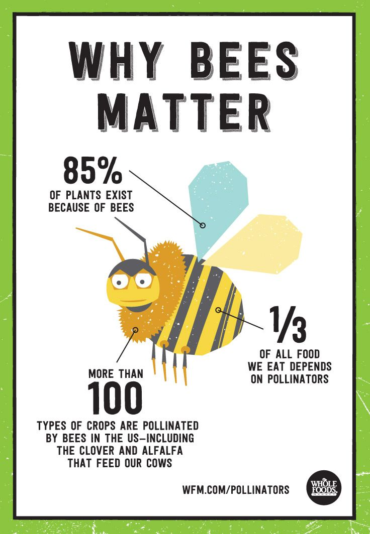 Why Bees Matter | WholeFoodsMarket.com