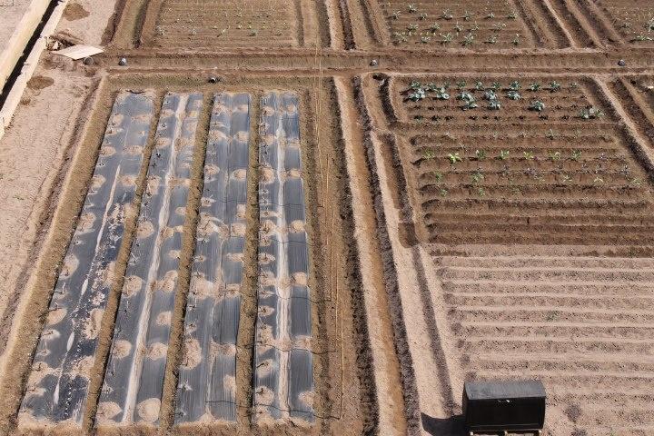 Parcelas que conforman los huertos ecológicos.