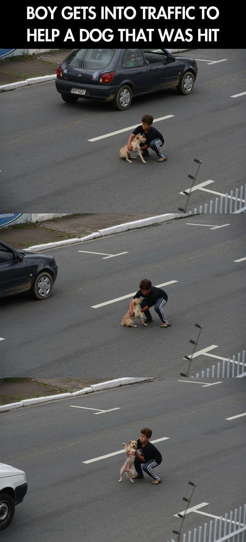 jongen helpt op de weg een hond die geraakt is