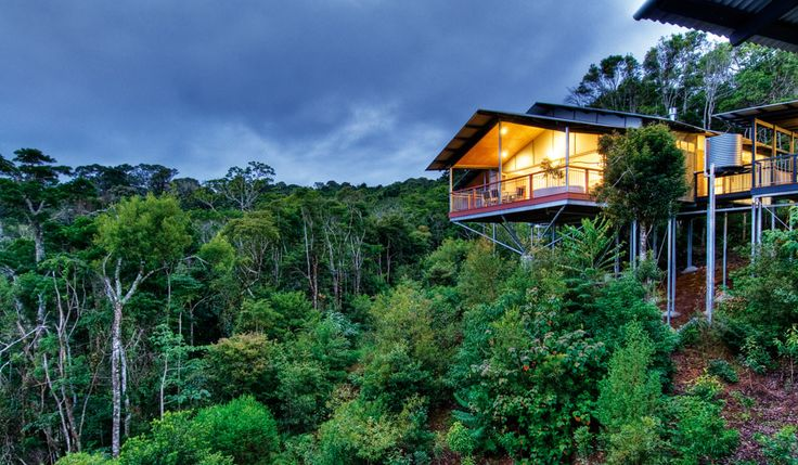 OReillys Rainforest Retreat is surrounded by the lush rainforest of Lamington National Park in the Gold Coast Hinterland #rainforest #travel #accommodation
