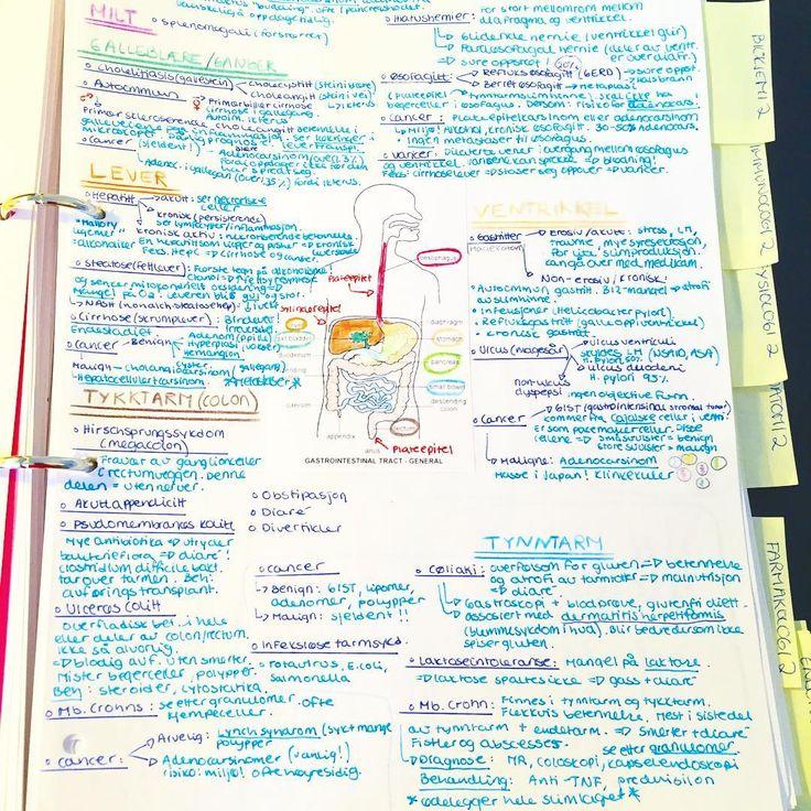 GI pathology notes - all in one A4 page 😁🌟👌🏻  _________________________________ #pathology #patologi #patologia #sykdom #mage #tarm #intestine #digestive #futuredoctor #medlife #medschool #medstud #medicalstud #medicalschool #medisinstudent #odontologi #medisin