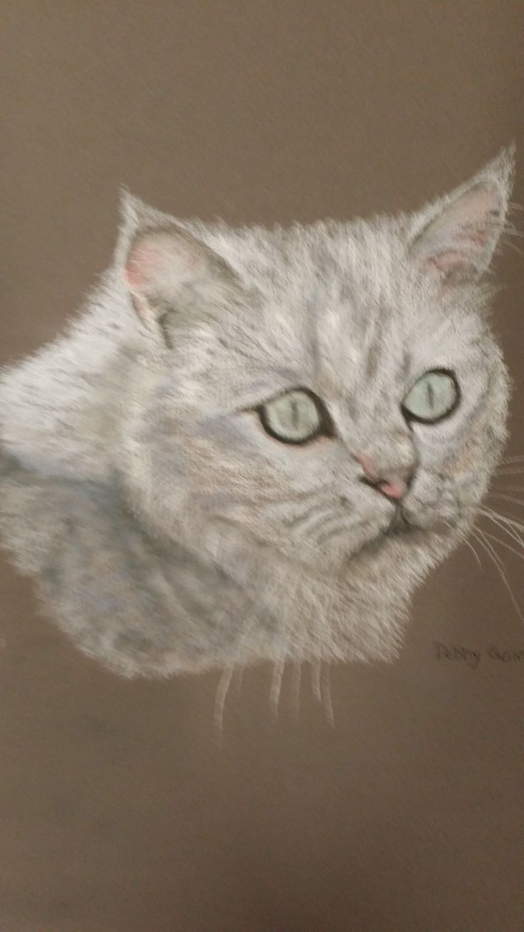 Artist:Debbie Gairns 'Niki' pastel pencil 30 x 21cm. Allsorts exhibition 19 March - 12 April 2015, Strathnairn Arts