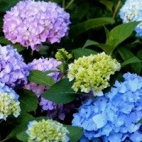 Buy Flowering Shrubs for sale online - Nature Hills Nursery