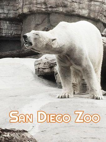 O Zoológico de San Diego é um dos melhores do mundo