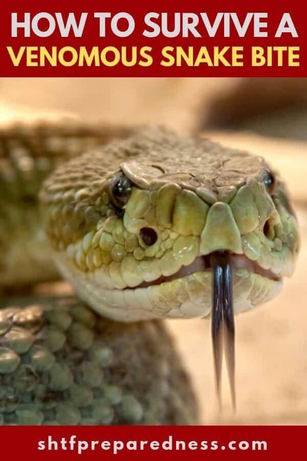 How To Survive A Venomous Snake Bite Shtfpreparedness In 2020