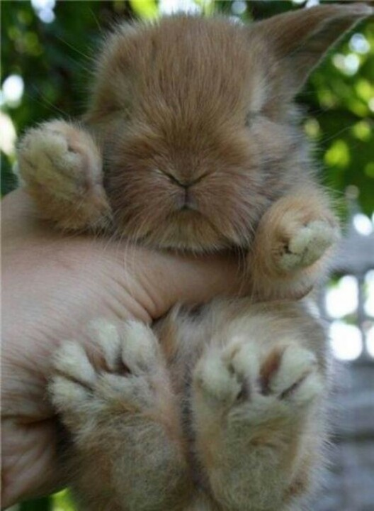 Cute! Look at those fuzzy feet!