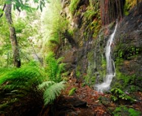 On the walk to Fairy Bower Falls, Morton National Park, near Solar Springs Bundanoon