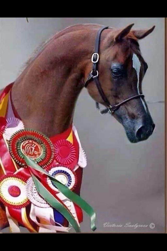 10 Best Saddle Seat Images On Pinterest Saddles