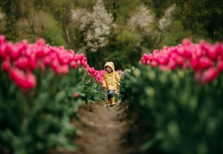 "140 Likes, 21 Comments - Robyn Marika Chubey (@helloglowphotography) on Instagram: ""I wish I could remember what it felt like to be tulip height 🌷! How amazing would it be to run…"""