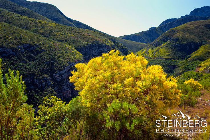Spring Bloom, Trudeau Pass, South Africa