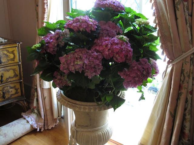 Ciao Domenica: An Abundance of FlowersFragrance Waft, Ciao Domenica