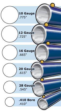 Shotgun gauge sizes (South Carolina Hunter Safety Course)