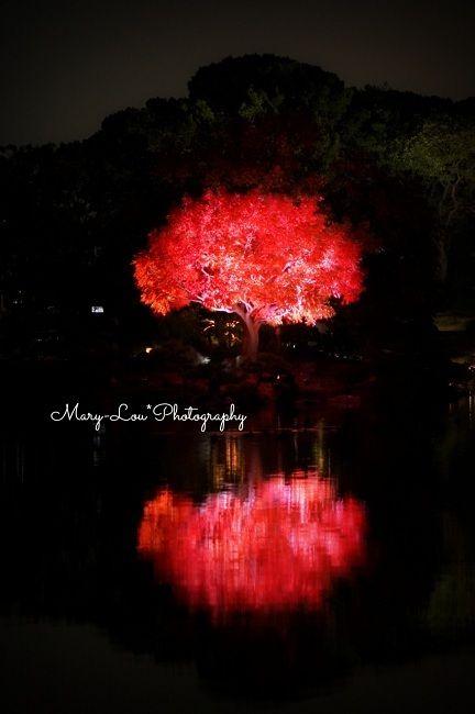 赤い木|mary-lou*Photography