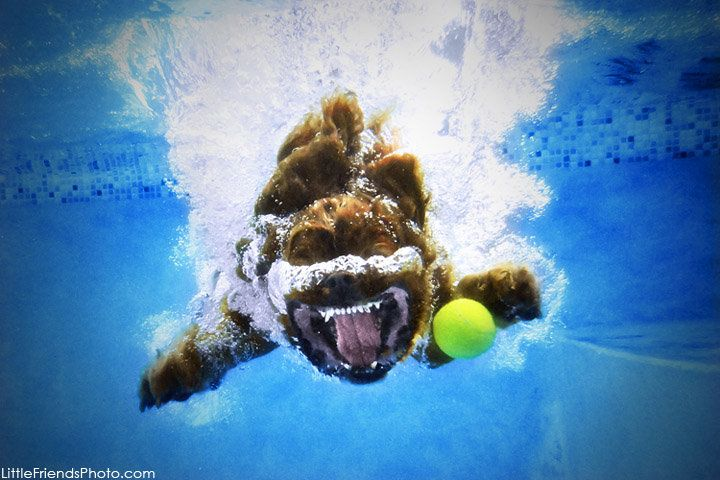 dog jumping in the water, what a great shotUnderwater Photos, Sethcasteel, Dogs Photography, Water Photography, Dogs Photos, Underwater Dogs, Seth Casteel, Pets Photography, Animal