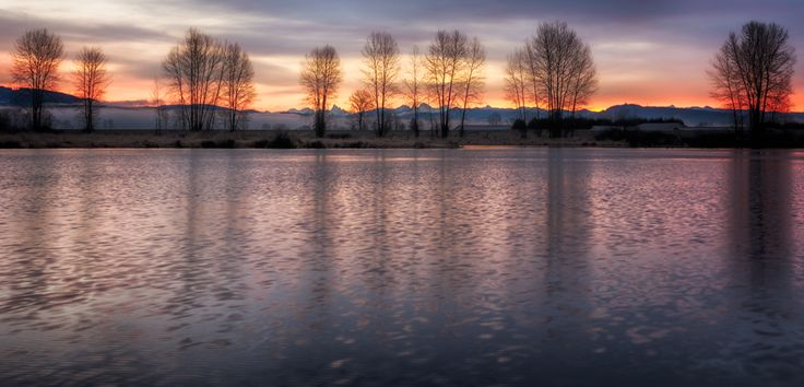 A winter sunrise behind the bare trees alongside the river.  Location: Trans Canada Trail, Pitt Meadows, British Columbia, Canada