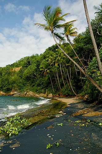 Black volcanic sand beach in dominica you wouldn 39 t for Black sand beach caribbean