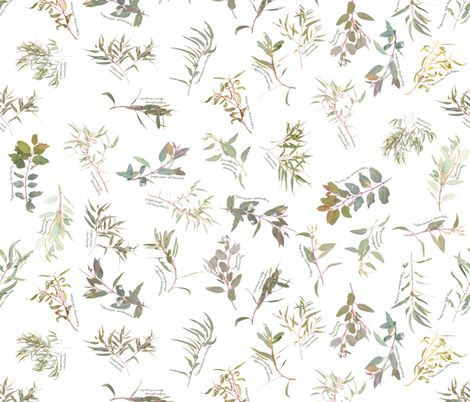 Eucalyptus foliage collection White SMALL fabric by emily_bieman on Spoonflower - custom fabric