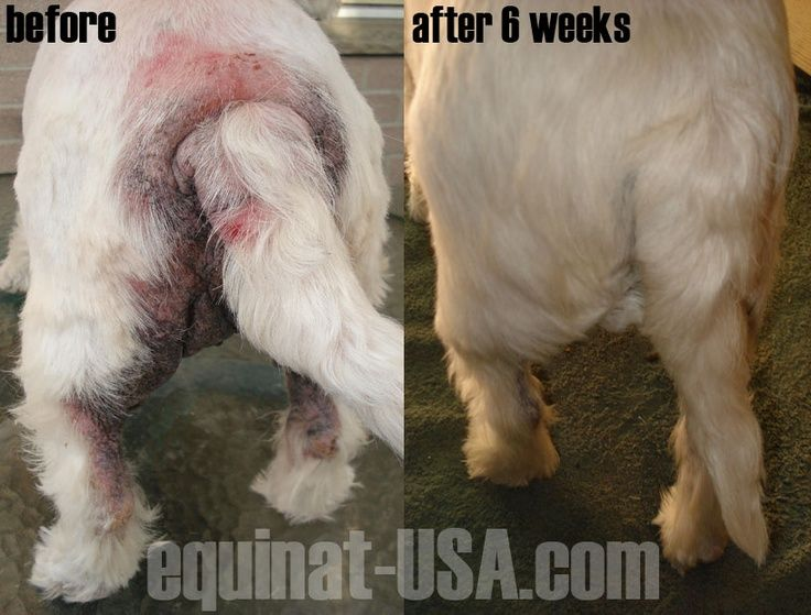 Dermacton all natural treatment for canine itchy sore skin conditions. Dog hair loss, chewing, biting itching and general distress. Customer photos - 30 day money back guarantee it works #dermacton