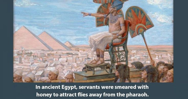 55 Interesting History Facts You Won't Learn Anywhere Else...