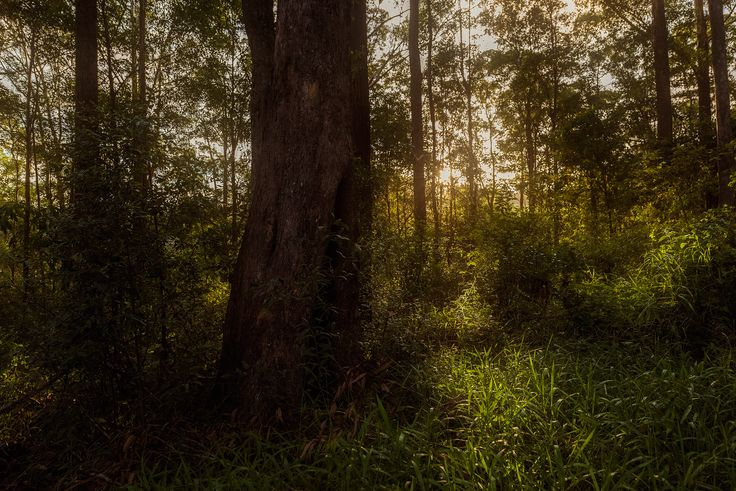 In The Woods (Standard) – Chen Hopwood Photography