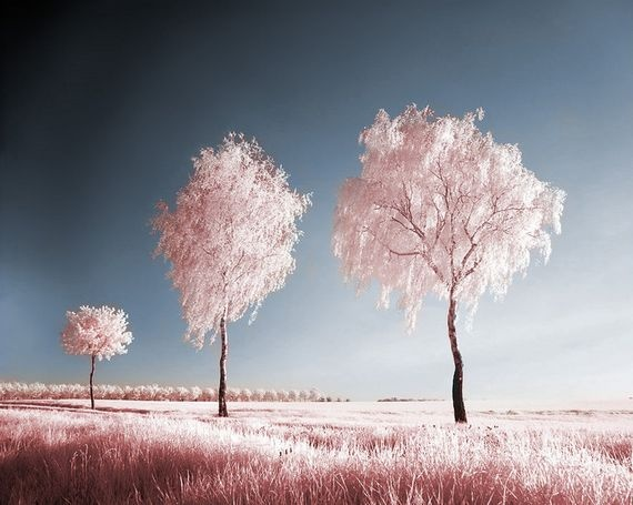 Best 25 Winter Trees Ideas On Pinterest: 25+ Best Ideas About Infrared Photography On Pinterest