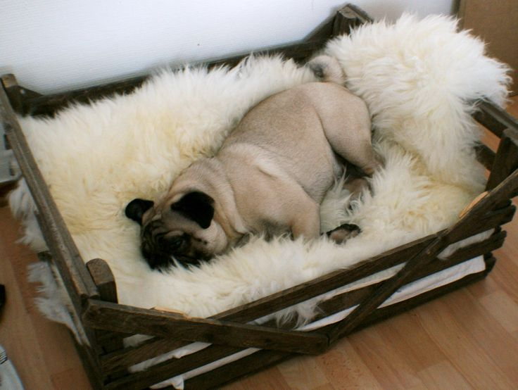Use a old crate as a bed for the cats <3                                                                                                                                                                                 Mais