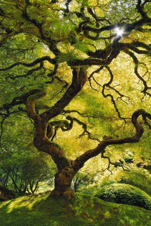 Inner peace by Peter Lik. I Love the light dancing with the leaves. I have a strong desire to scale these branches all over to the top. . .
