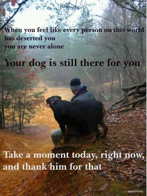 Dogs... never let us feel alone, and so let's do thank all of them for allowing us to care for them. #DogLover #AdoptRatherThanBuy http://caninesforchange.com/