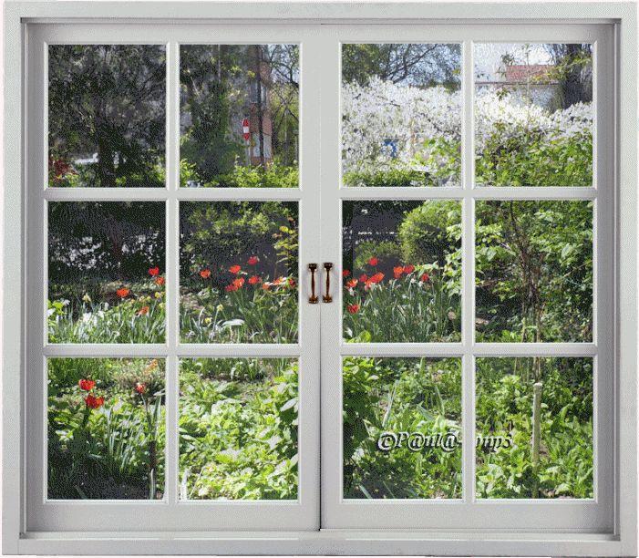Spring in my window - Primavara la fereastra mea