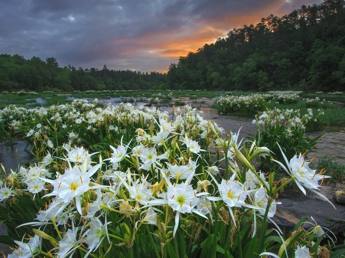 Cahaba River National Wildlife Refuge in Alabama supports