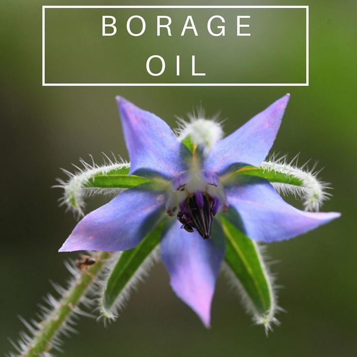 Benefits of Borage Oil