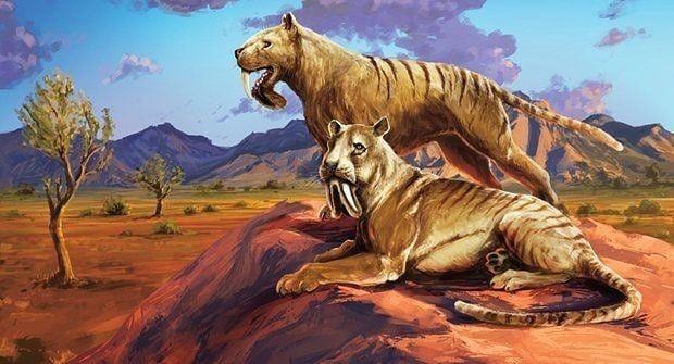 1 Thylacosmilus Atrox By Karel Cettl 2 Skeleton Display At Egidio Feruglio Paleontological Museum Prehistoric Animals Extinct Animals Prehistoric Creatures