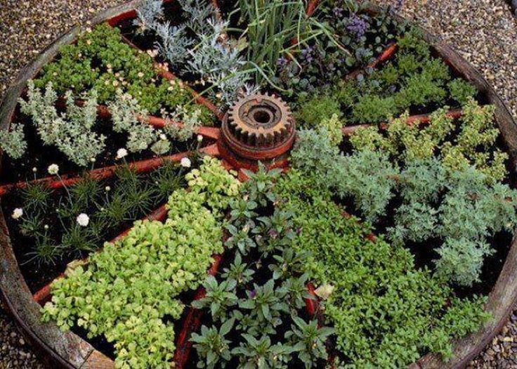 We don't have a wagon wheel lying around, but for an idea for growing herbs, this is pretty good.