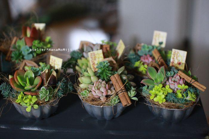 イベント終了(´∀`) : 多肉植物寄せ植え販売 アトリエ華もみじ