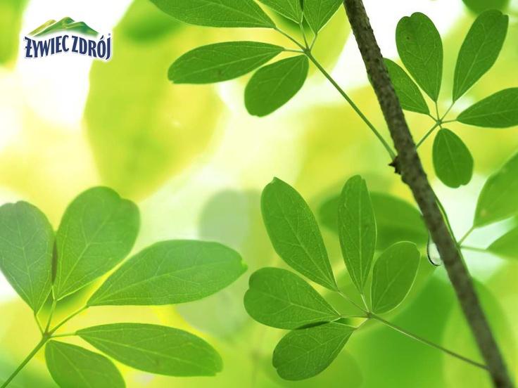 Liście beskidzkiego drzewa