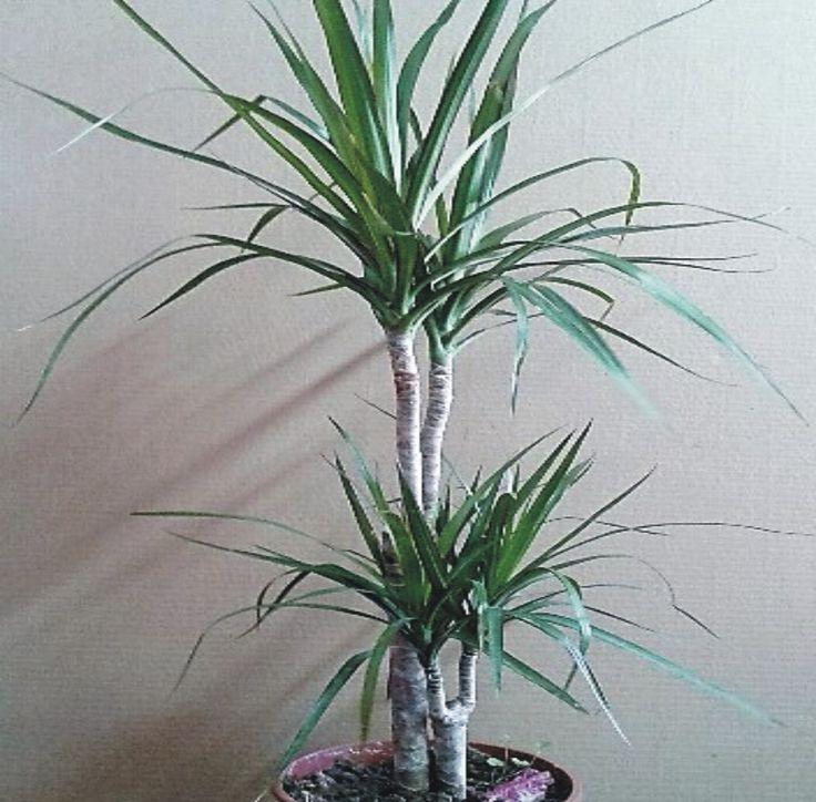 M s de 1000 ideas sobre comprar plantas online en pinterest - Plantas de interior online ...